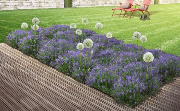 Staudenbeet Lauch und Lavendel